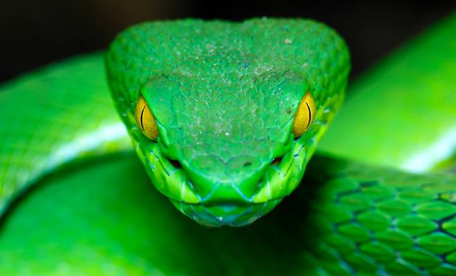 Resultado de imagen para serpientes