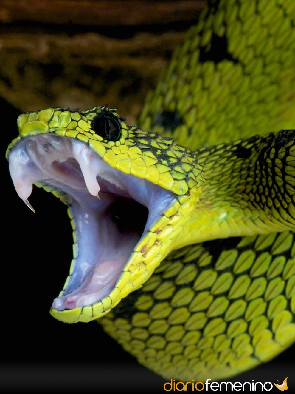 La Buena Suerte De Soñar Con Serpientes Sueños Con Reptiles