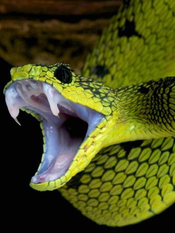 La buena suerte de soñar con serpientes: sueños con reptiles