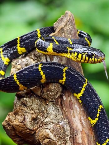 ¿Qué significa soñar con serpientes que no te hacen nada ni te atacan?