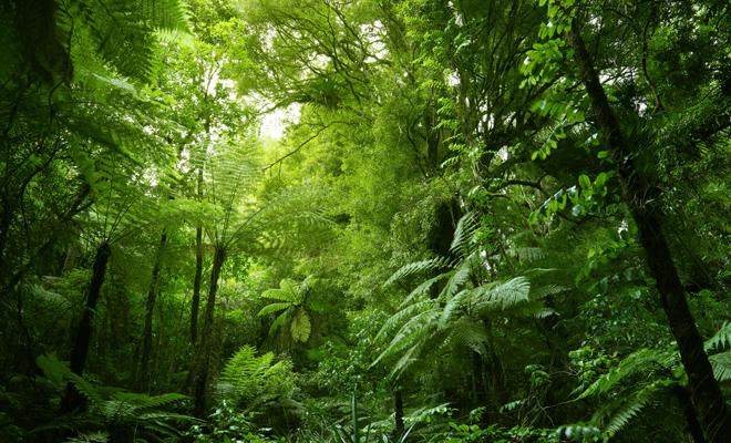 Significations positives de la couleur verte