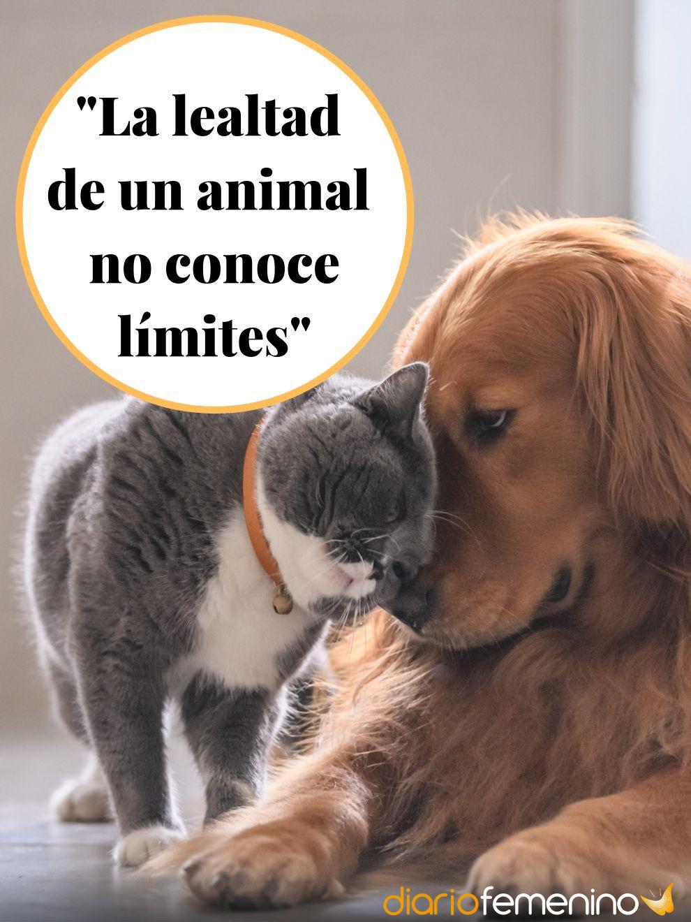 Las Frases Más Lindas Sobre El Amor Por Los Animales