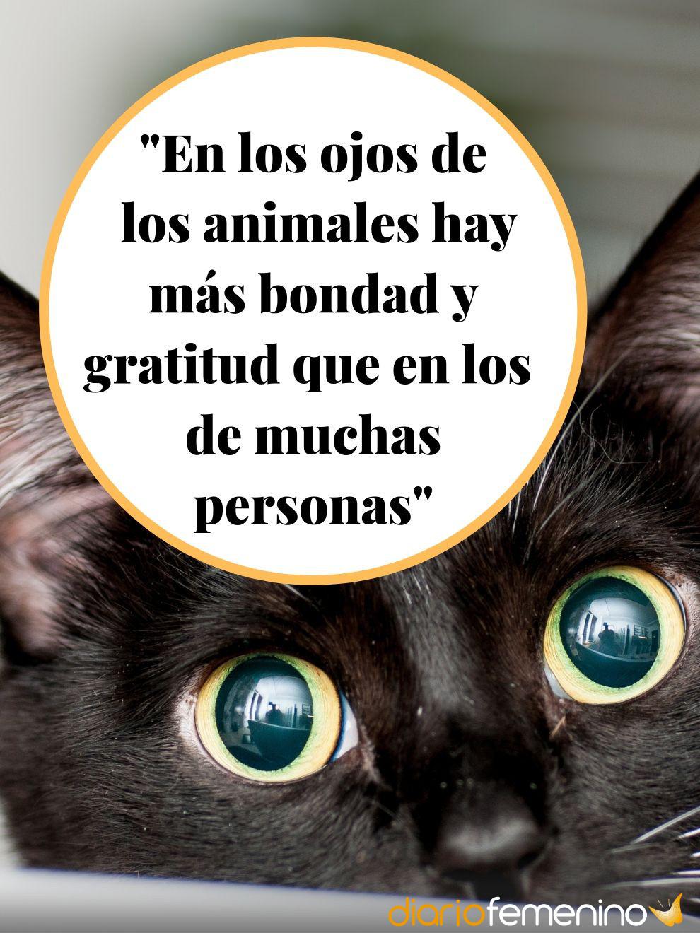 Frases de amor sobre los animales: son pura bondad y gratitud