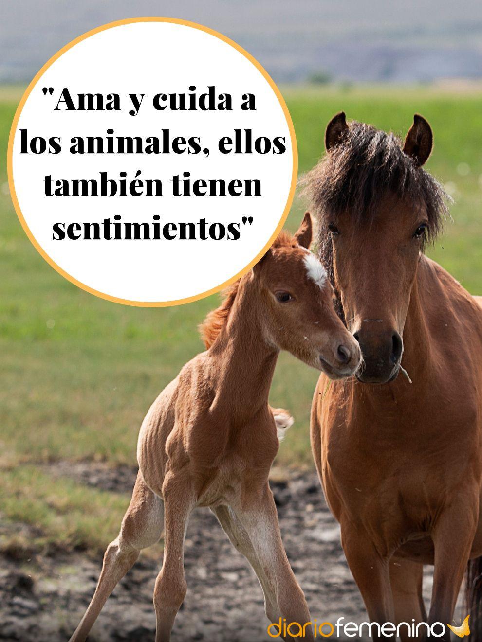 Frases De Amor Sobre Los Animales Ellos También Sienten