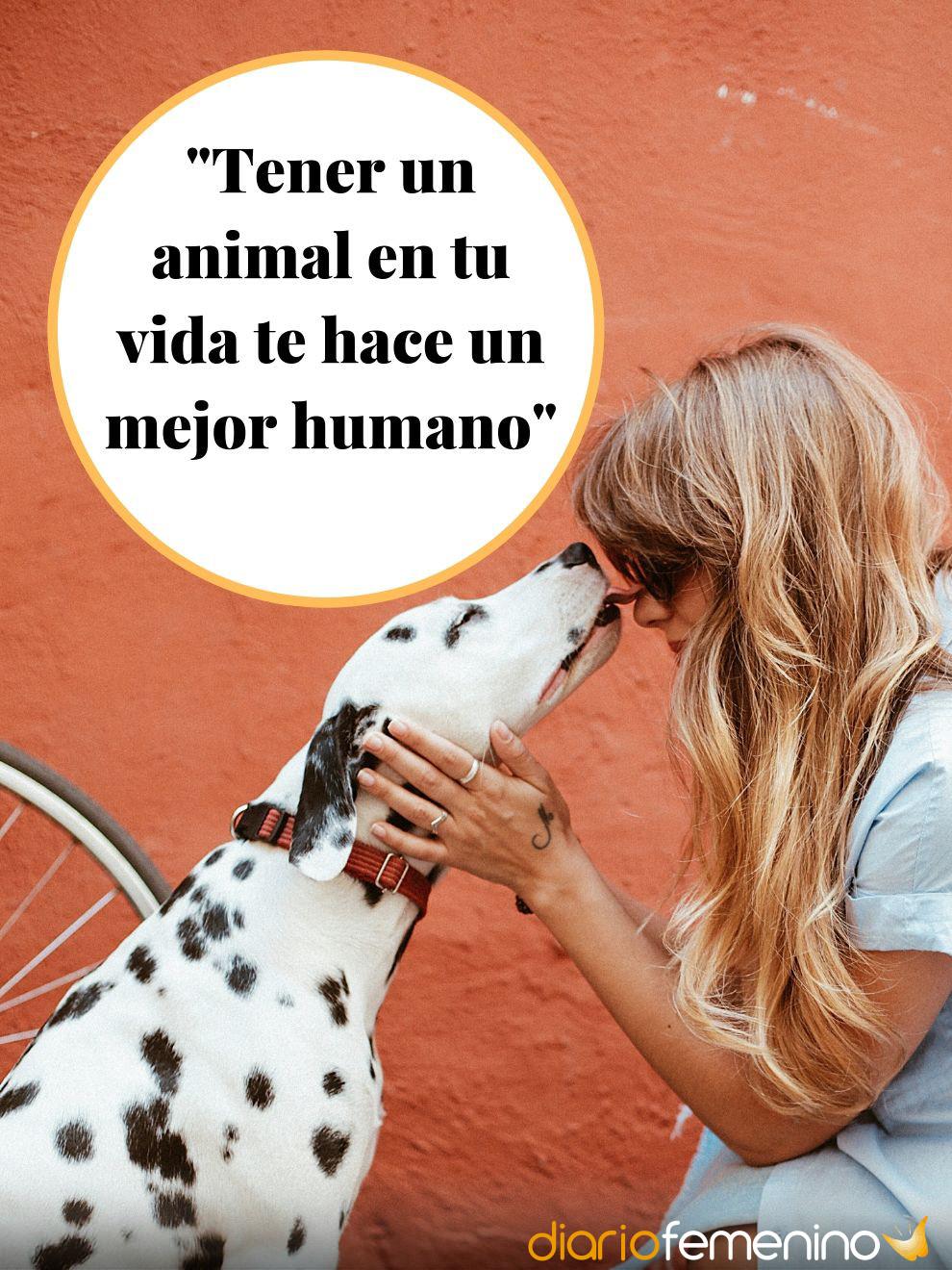 Frases De Amor Sobre Animales Mejora Tu Forma De Vida