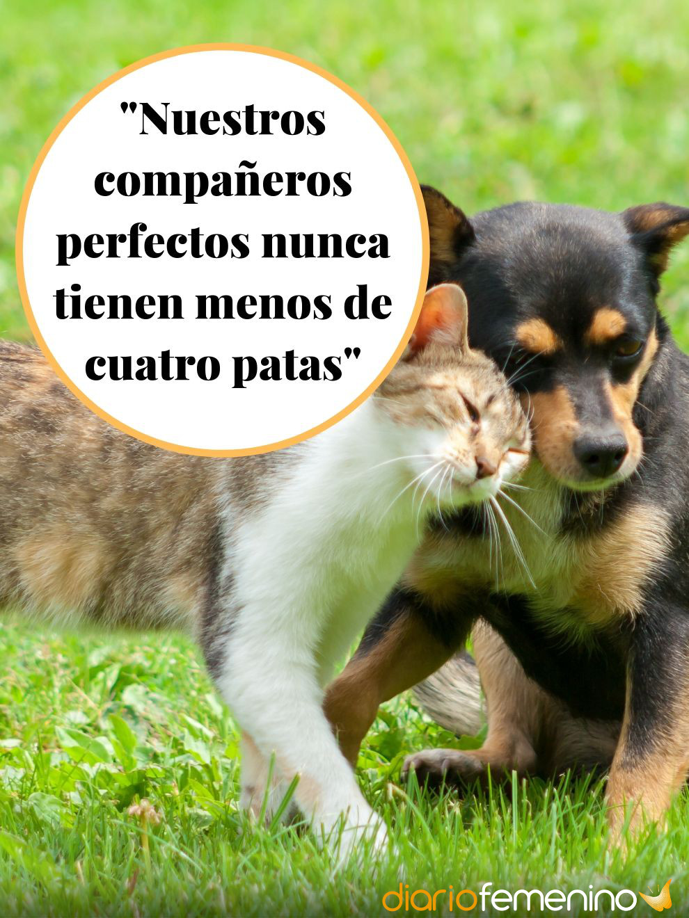Frase De Amor Sobre Animales Los Mejores Compañeros