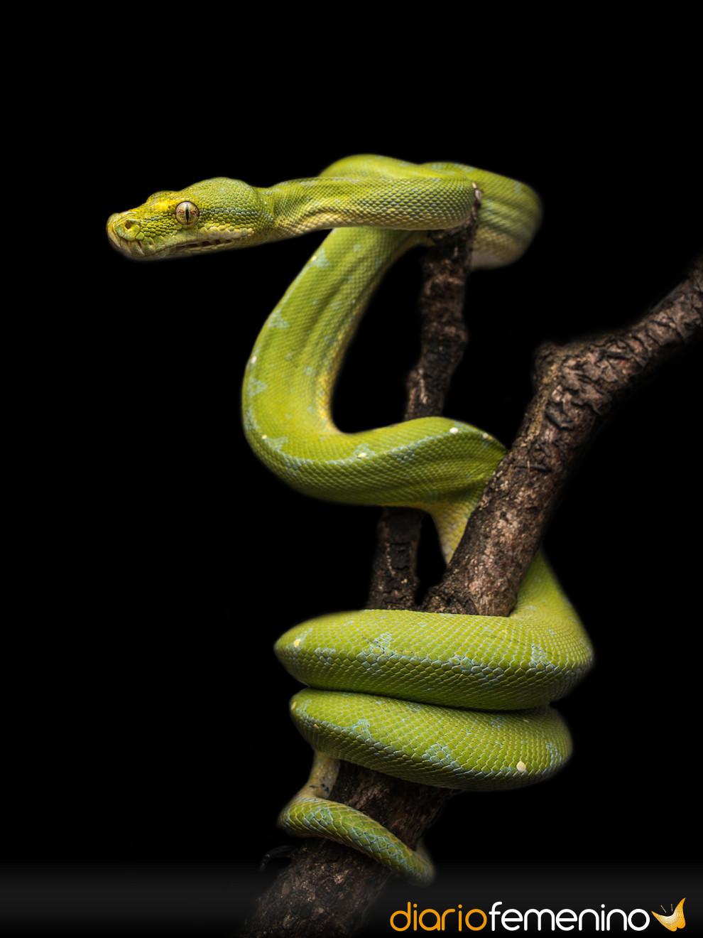 Soñar con serpientes: ¿síntoma de infidelidad?