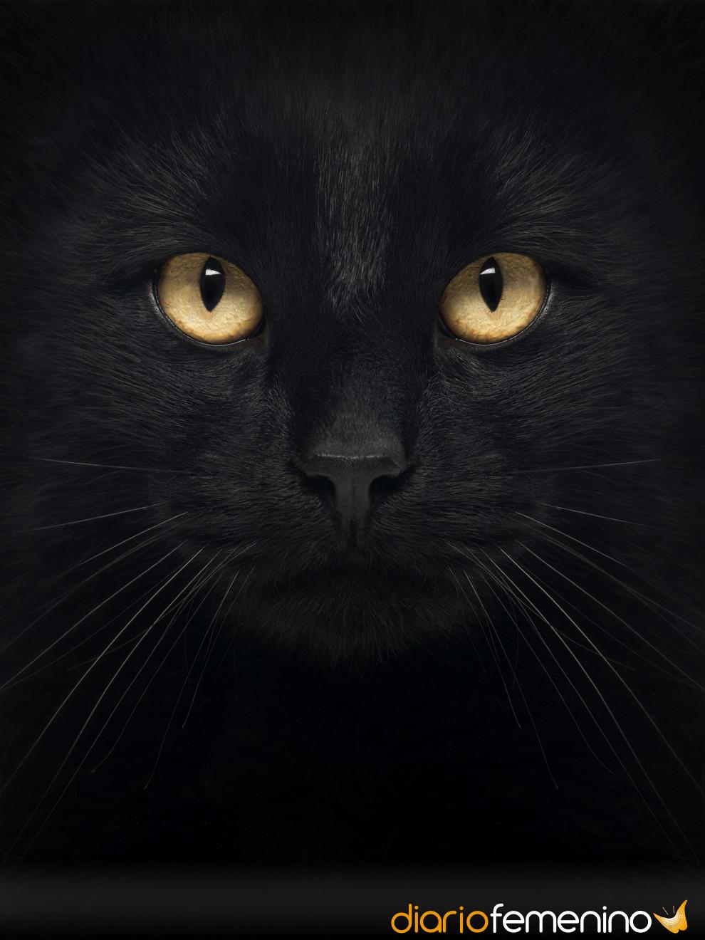 Soñar con gatos negros: presagio de engaños y mentiras