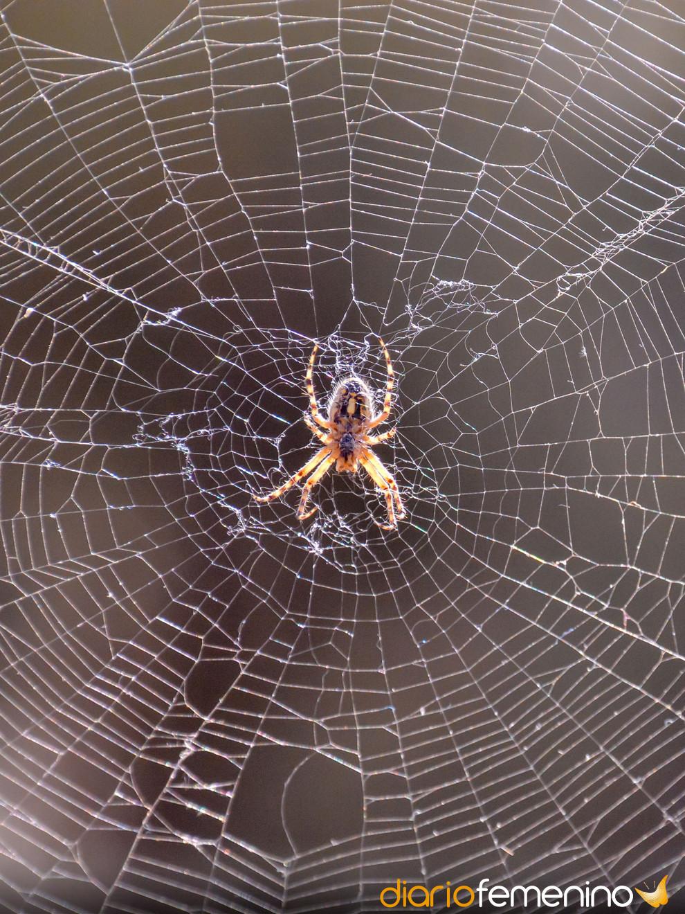 Soñar con arañas: ¿tu pareja te está engañando?