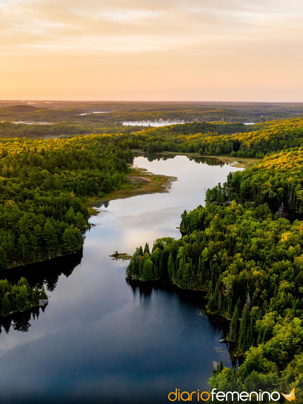 Soñar con la naturaleza: el significado y su vía de escape