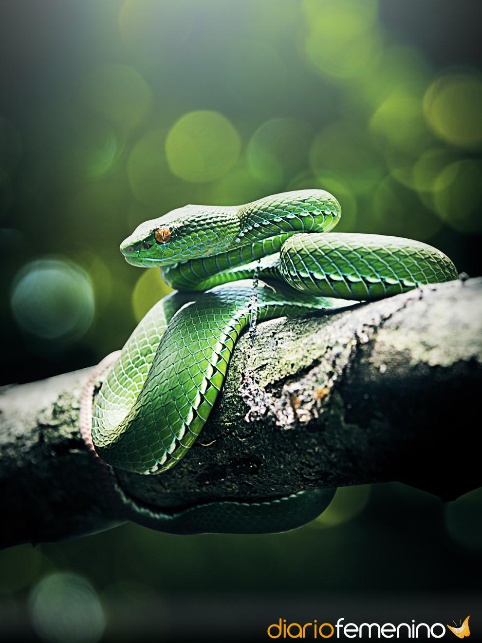 Soñar con serpiente puede traer buena suerte