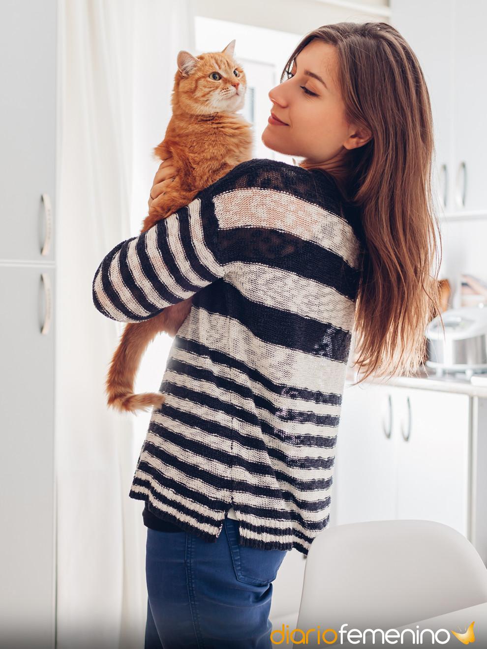 El significado de soñar con gatos: ¡cuidado con tus sueños felinos!