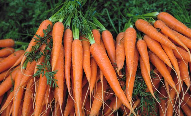 Sonar Con Zanahorias Todos Sus Significados Positivos Y Negativos En cuanto a las religiones que se profesan en el continente más grande del mundo hay una gran variedad. sonar con zanahorias todos sus