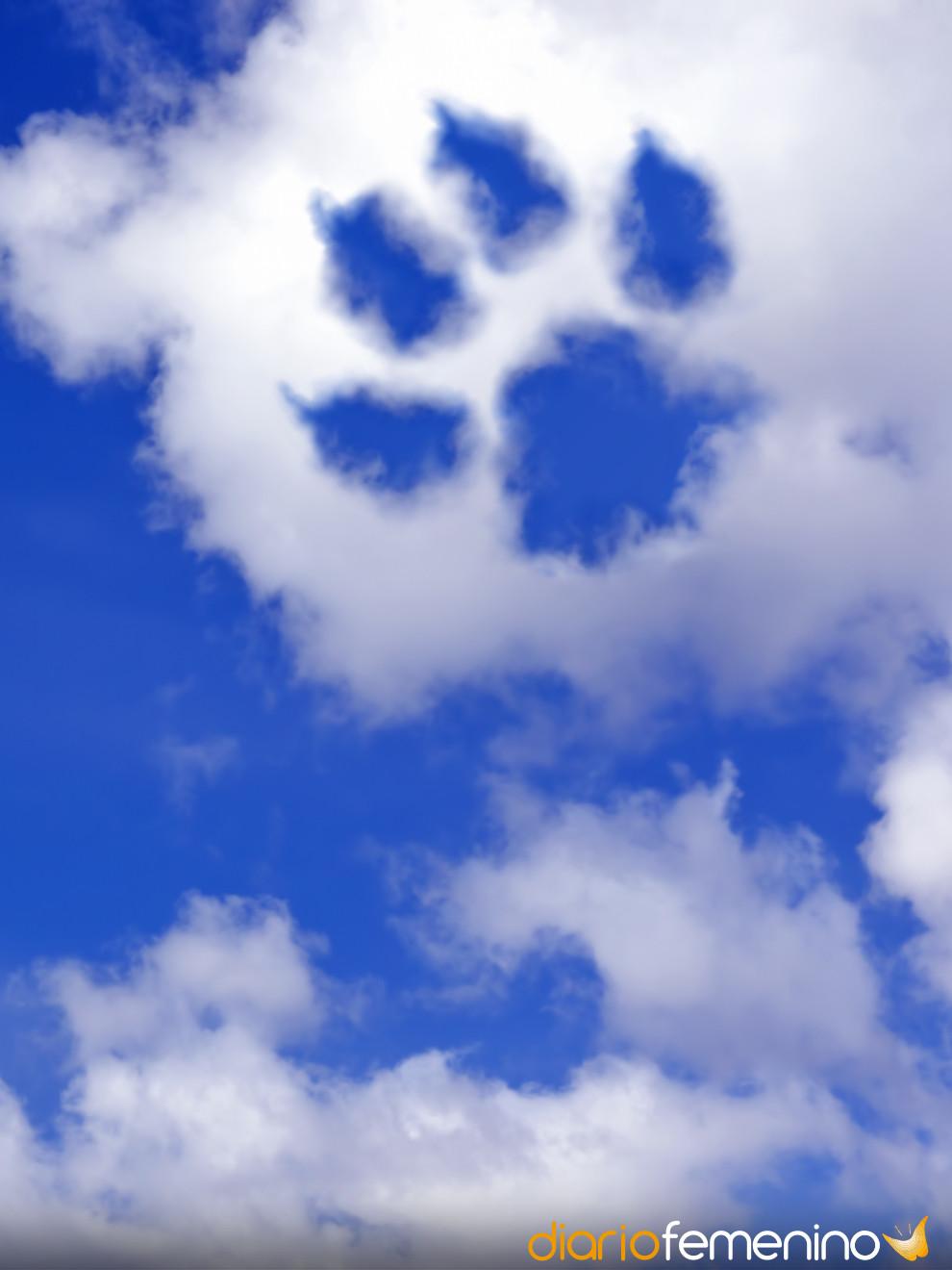 Emotivas Cartas De Amor Para Tu Perro Fallecido Descansa En