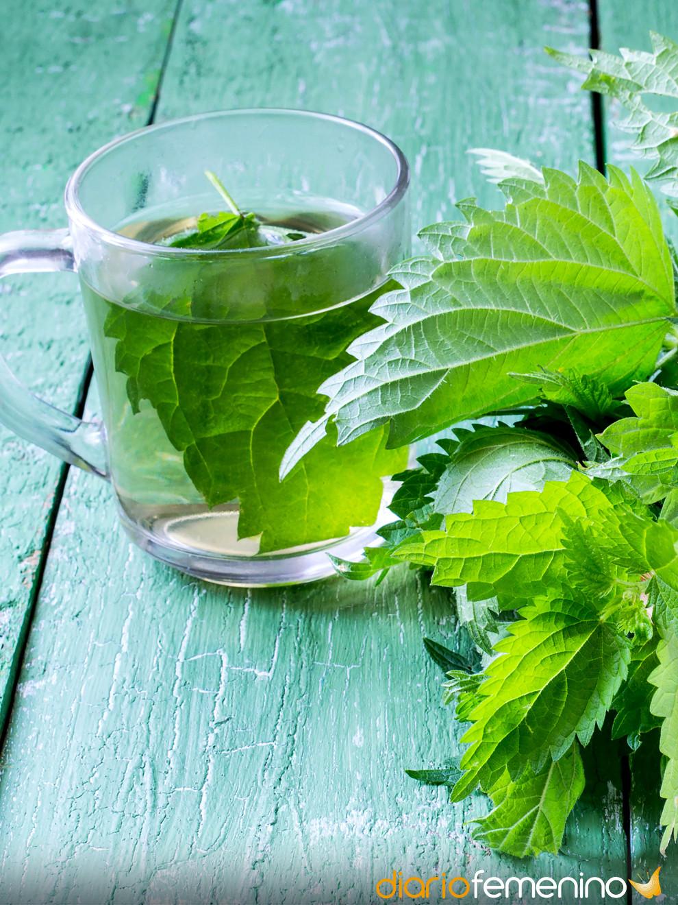 Contraindicaciones del te de ortiga