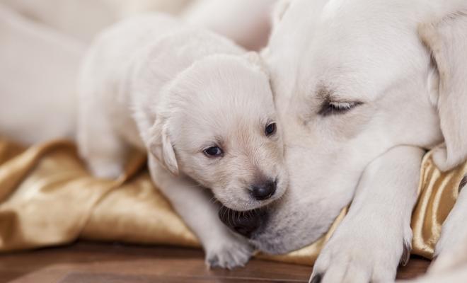 Nombres para machos y hembras de perro