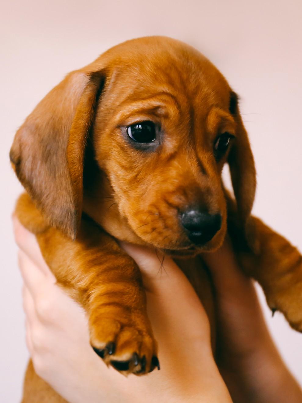 27 Bonitos Nombres Para Perros Que Son Tendencia En 2019
