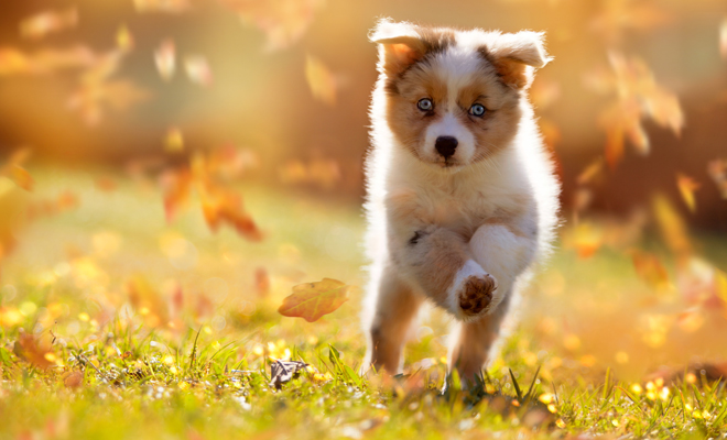 Los mejores nombres para perros del otoño
