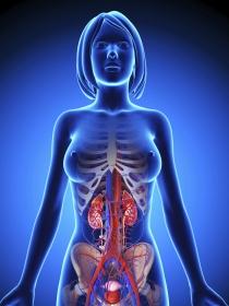 Síntomas de que algo va mal con tus riñones