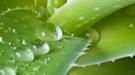Hierbas y plantas medicinales para el dolor de estómago