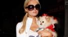 Selena Gomez, Irina Shayk... y sus mascotas: los famosos y otros animales