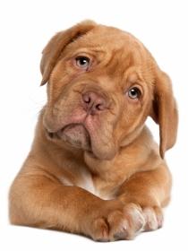 Nombres de perros bonitos con la letra F