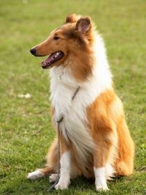 10 nombres perfectos para perros grandes