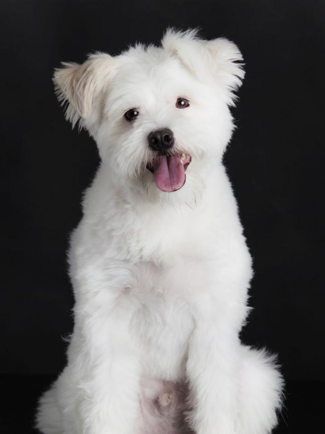 10 Nombres Para Perro Con Significado