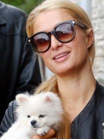 Los mejores nombres para perros blancos