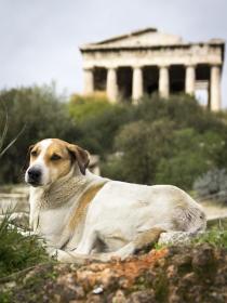 11 nombres griegos para perros y perras