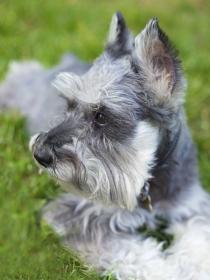 Los mejores nombres alemanes para tu perro