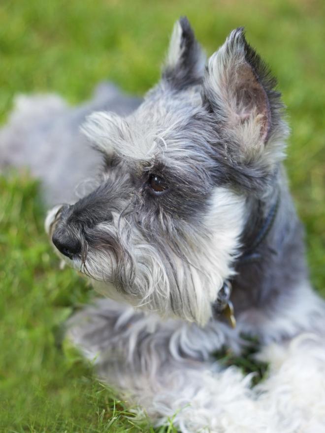 Los mejores nombres alemanes para tu perro - Menstruacion dos veces al mes ...