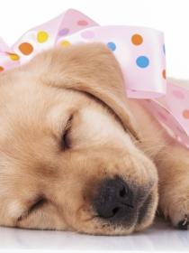Los mejores chistes, gifs y memes de perros: fotos y vídeos divertidos