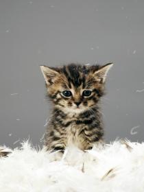 Las mejores fotos, vídeos, gifs y memes de gatitos