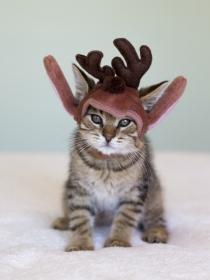 A Papa Noel también le gustan los gatos: Navidad gatuna