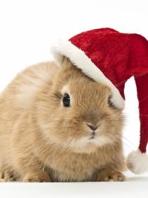 6 razones por las que las mascotas también tienen que celebrar Navidad