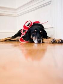 6 razones por las que perros y gatos odian la Navidad