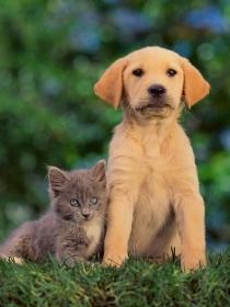 Perros y gatos arrepentidos de sus travesuras