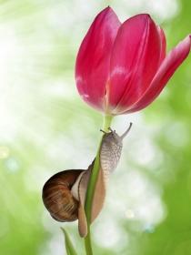 Significado de soñar con caracoles: ¿temes por tu relación de pareja?