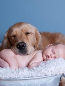 7 imágenes que te harán enternecer: perros, gatos y bebés, la combinación perfecta