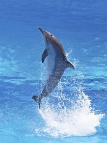Significado de soñar con delfines: vas por el buen camino
