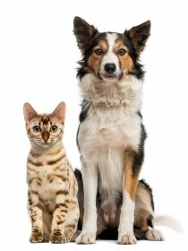 8 inventos geniales para mascotas por los que querrás un perro o gato