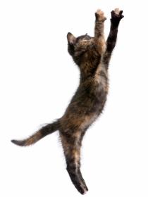 Por qué los vídeos de caídas de gatos son un fenómeno viral: pobres gatitos…