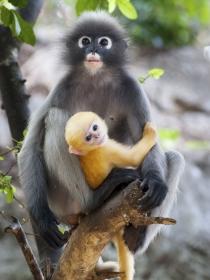 Significado de soñar con monos: eres una persona inteligente