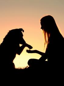 Horóscopo chino y compatibilidad de signos: la mujer Perro en el amor