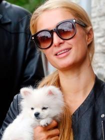 Perros de famosos: Paris Hilton también adora a sus pomerania
