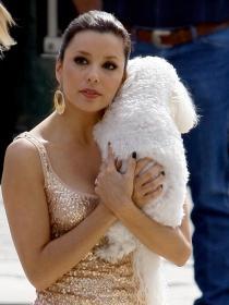 Perros de famosos: Eva Longoria, otra celebrity con un bichón maltés