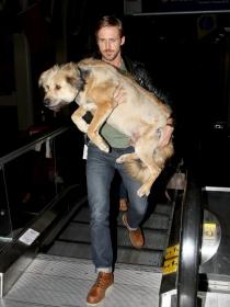 Perros de famosos: el enorme perro mestizo de Ryan Gosling