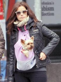 Perros de famosos: Marta Torné, enamorada de su Yorkshire
