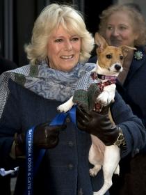 Perros de famosos: los Jack Russell Terrier de Camilla Parker Bowles